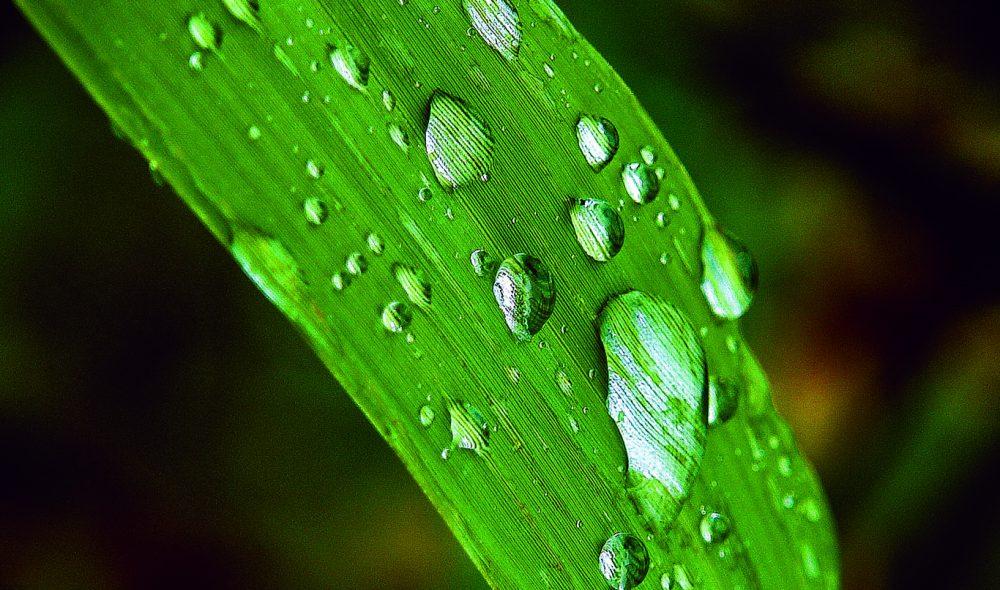 RIKT: Øya Mljet er kjent for sitt mangfoldige planteliv, og etter litt regn aksentures fargene ytterligere.