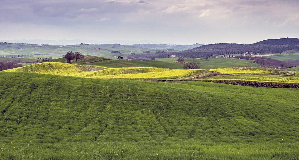 KLASSISK LANDSKAP: Det rullende landskapet rundt Montepulciano og Pienza er det de fleste av oss forbinder nettopp med Toscana.