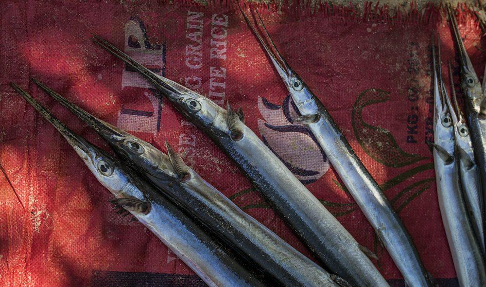 HAVFISKE: Litt av dagens fangst i farvannene utenfor østsiden av Zanzibar.